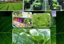 बिना केमिकल के जेविक खेती का चमत्कार