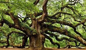 वृक्ष देवता के बारे मे महत्वपूर्ण जानकारी
